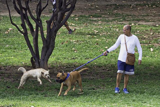 Aggressive Dog in Barcelona Park