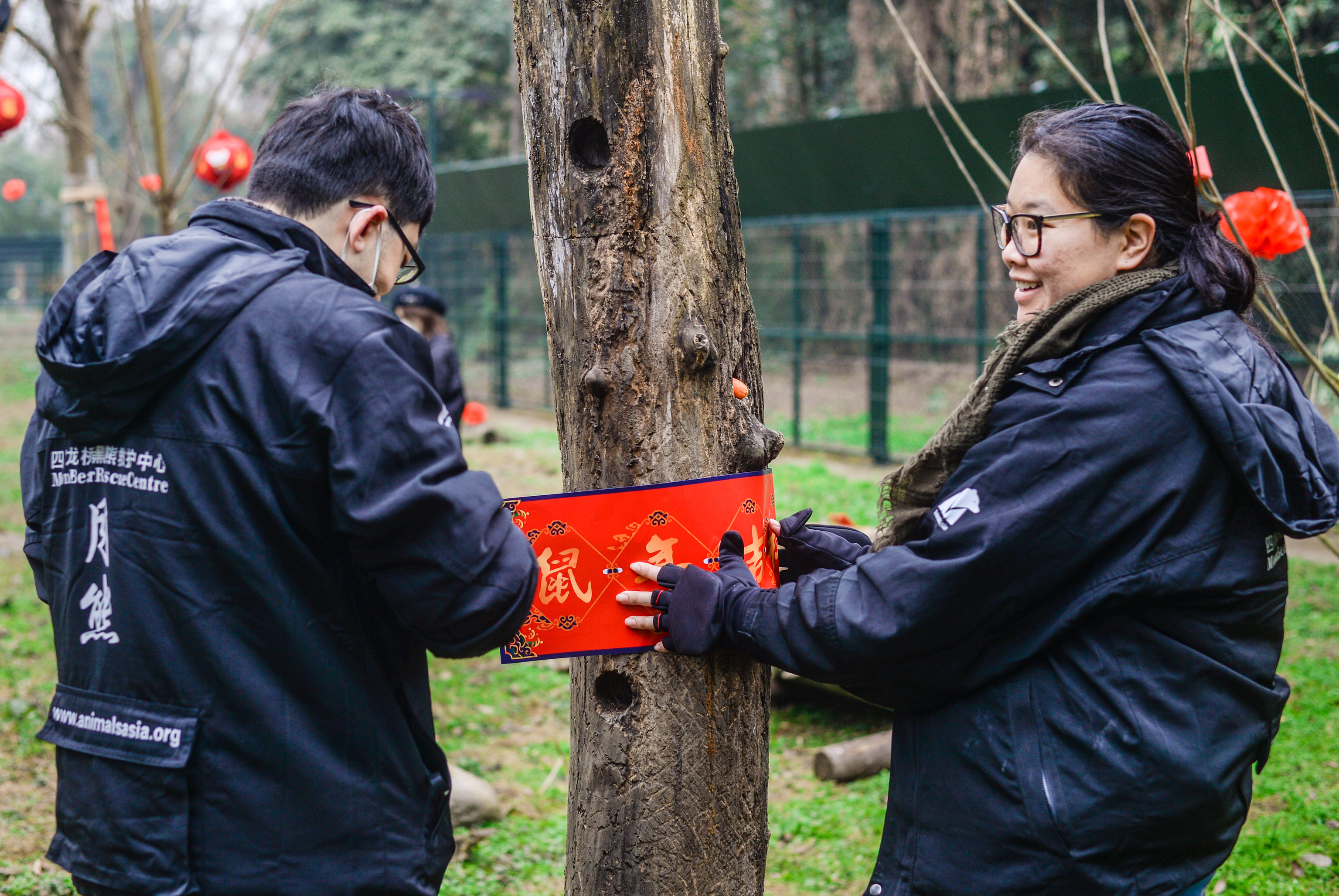 Preparations for Lunar New Year at the Chengdu Rescue Centre