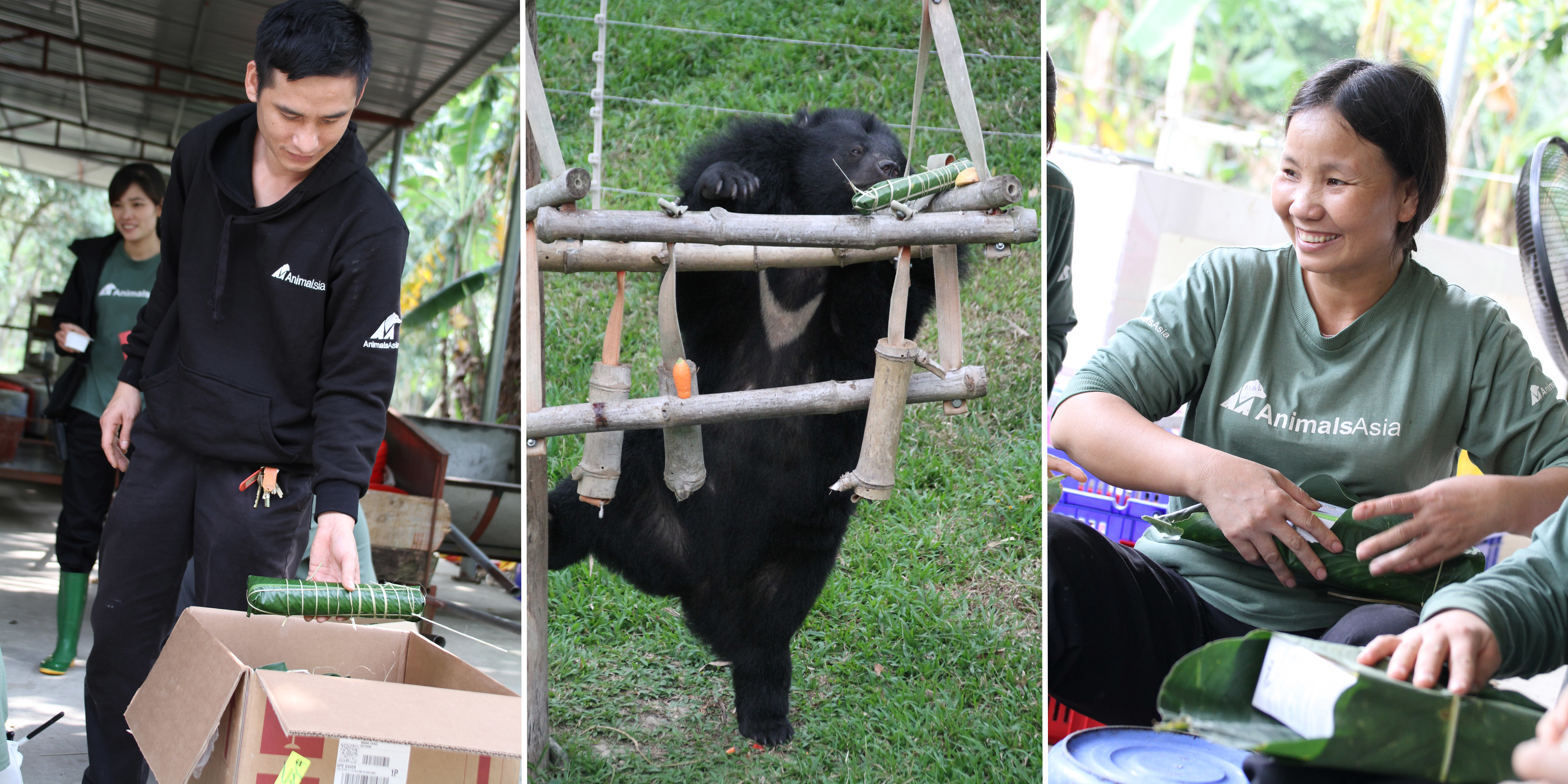 Bear team manager Chien, Bazan and bánh chưng being prepared