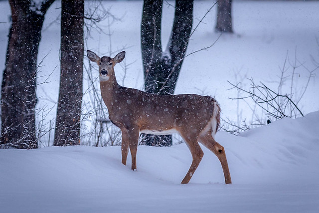 silence in snow