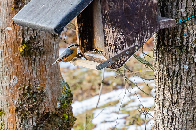 The bird house in the forest