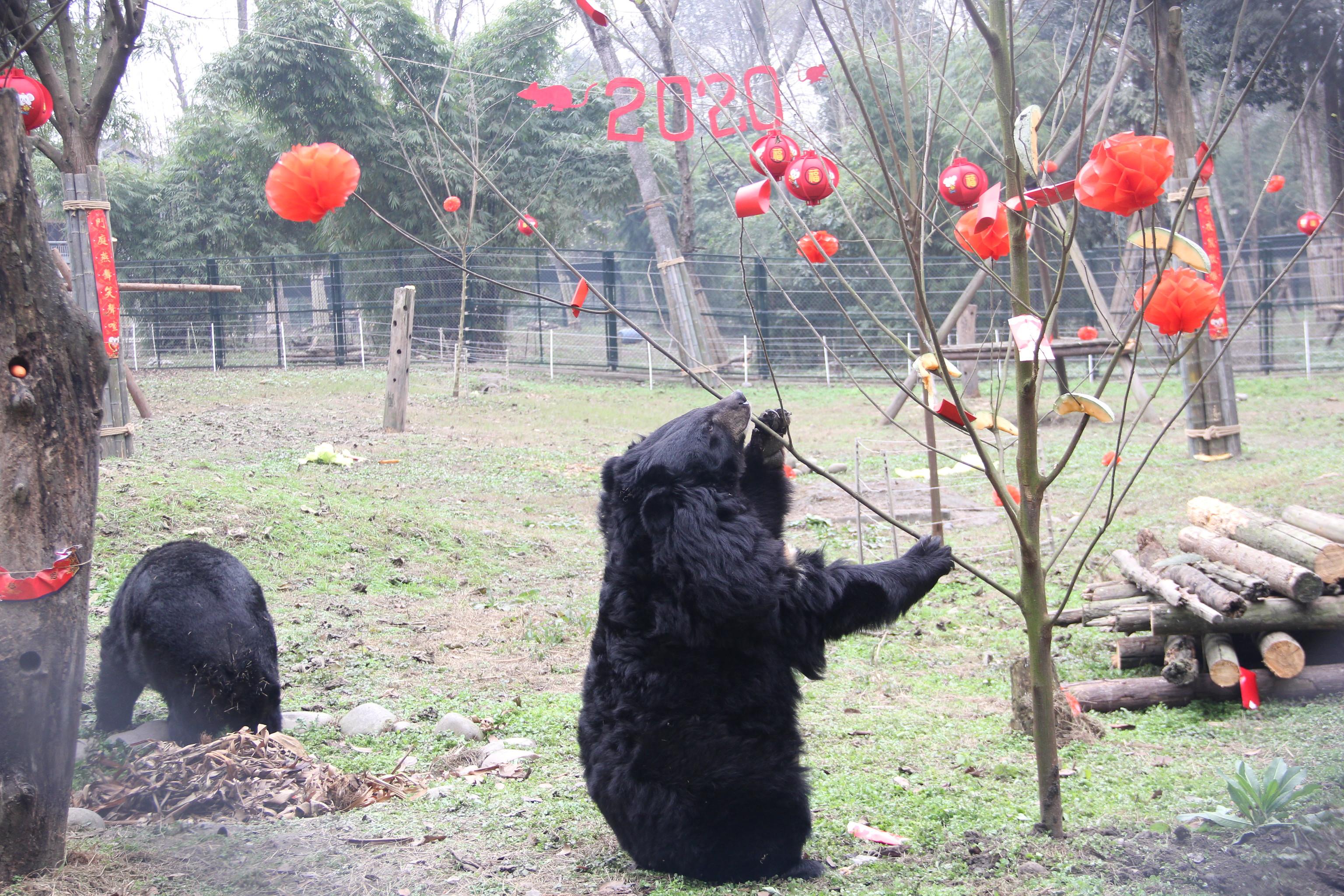 Vicki at the Chengdu Rescue Centre