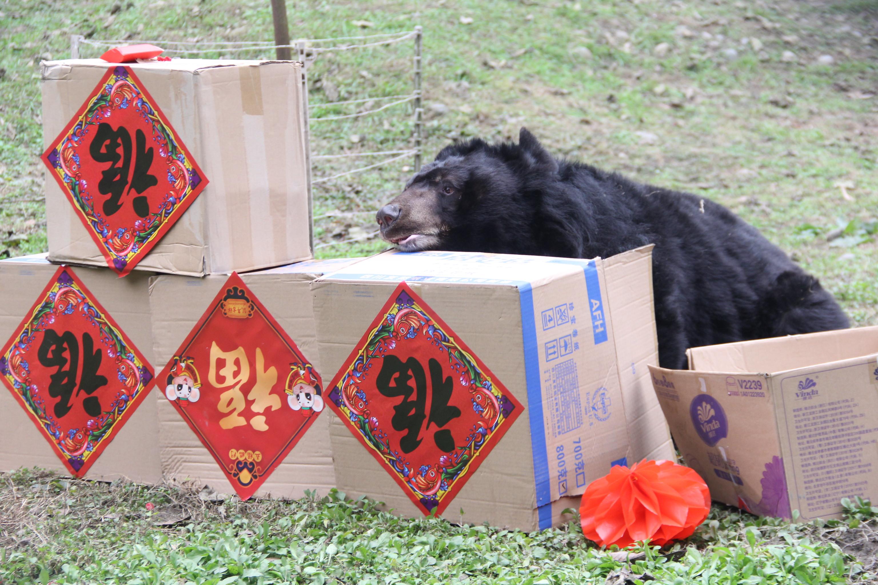 Bodo at the Chengdu Rescue Centre