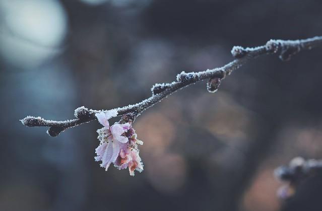 Winter secrets...