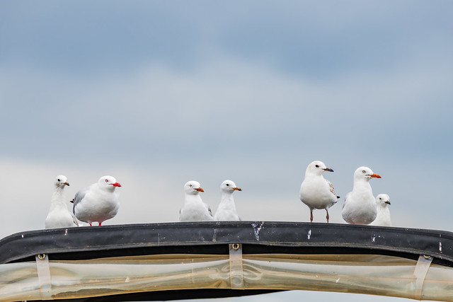 Seagulls on a boat at the waterfront