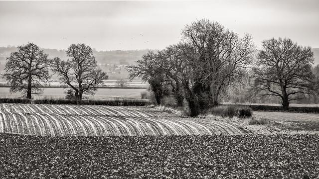 Historical farming….