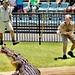 Robert Irwin in action - Australia Zoo