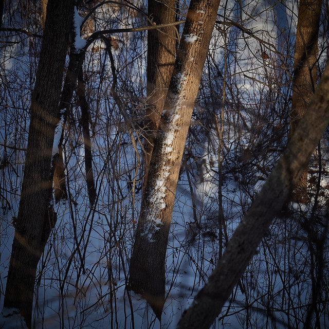 with trees, afternoon lights and shadows, Somers, WI, USA, 1-19-20 2