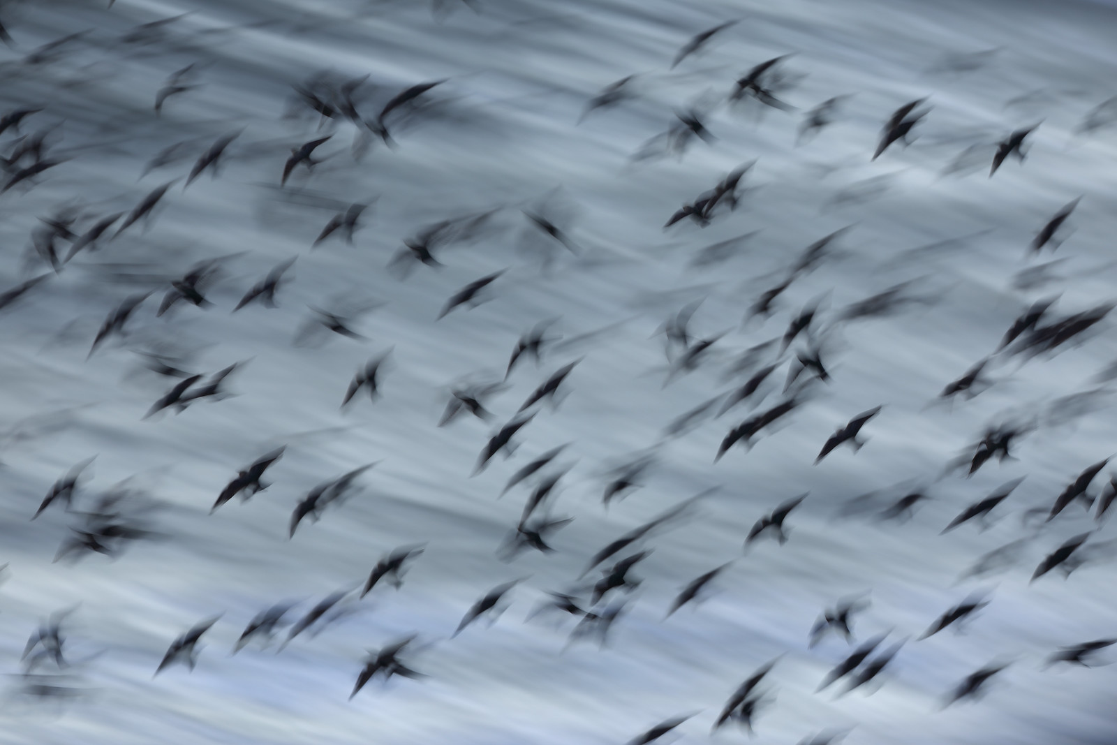 Starlings over Stormy Seas