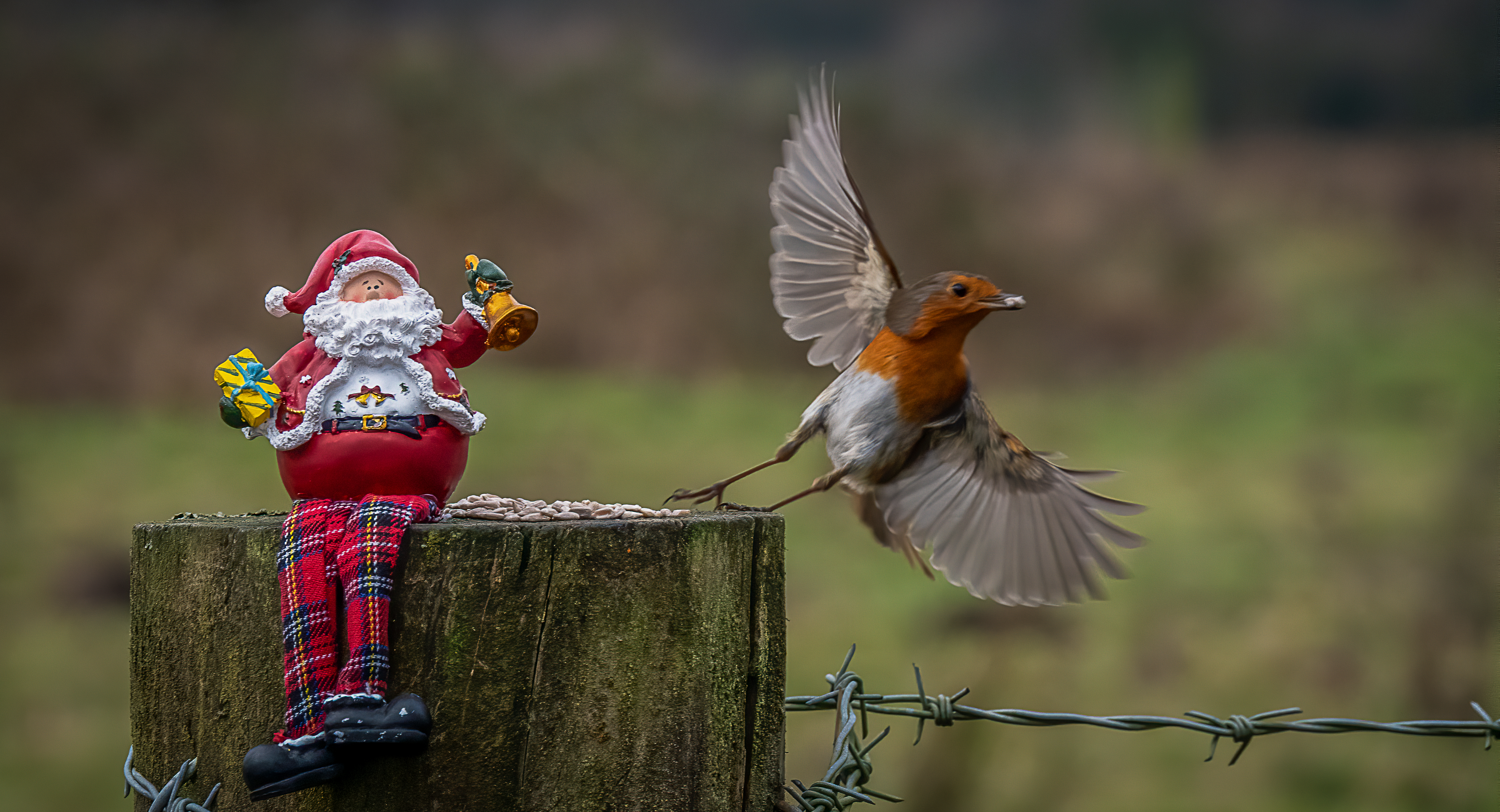 December Photography Competition