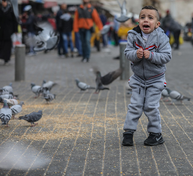 The Birds (a tribute to Hitchcock) – Do not misinterpret the situation: the aggressor here is this cute little boy.