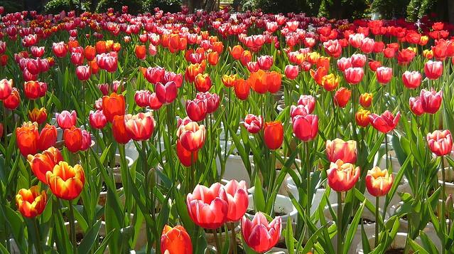 Springtime! 春天!