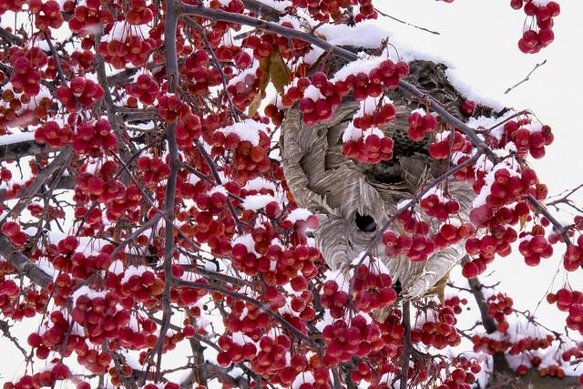 Green Bay Campus Snow Scenes