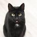 The Rude Cat :wink: