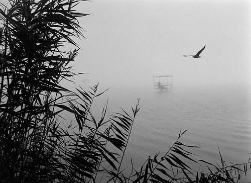 Foggy-day-at-the-lake-II(Analogue)