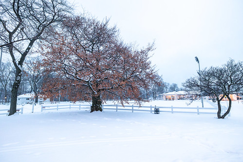 A Pop of Color in a White Winterland