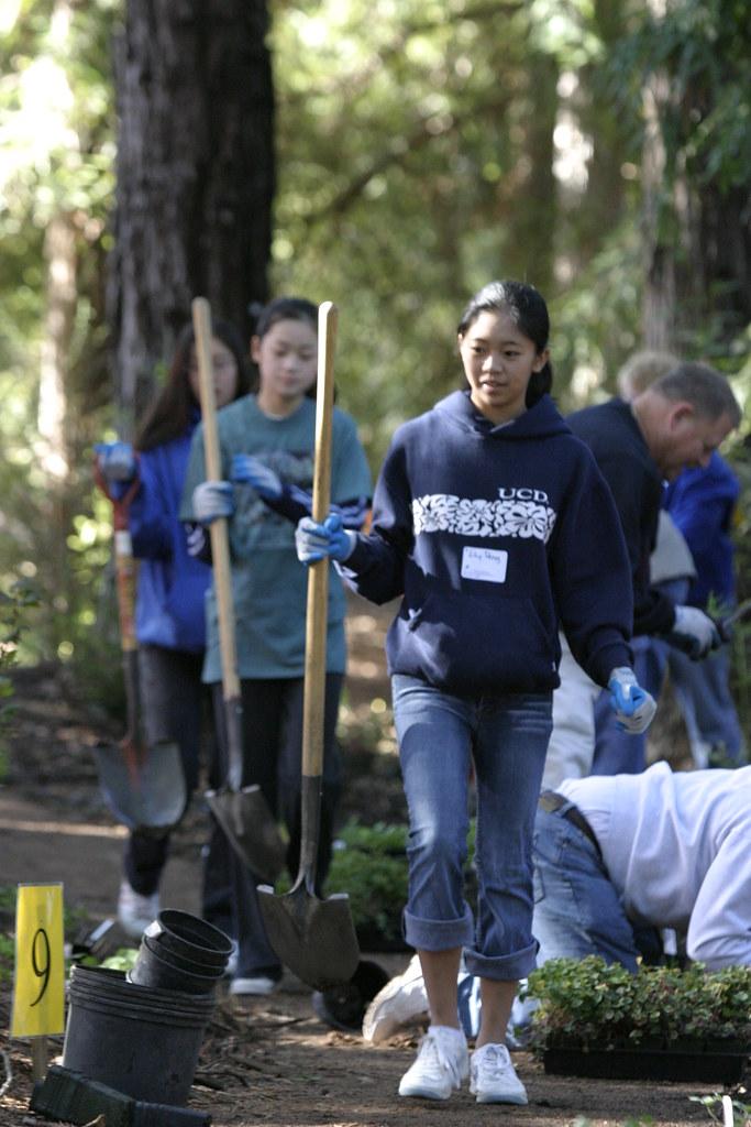 redwood13