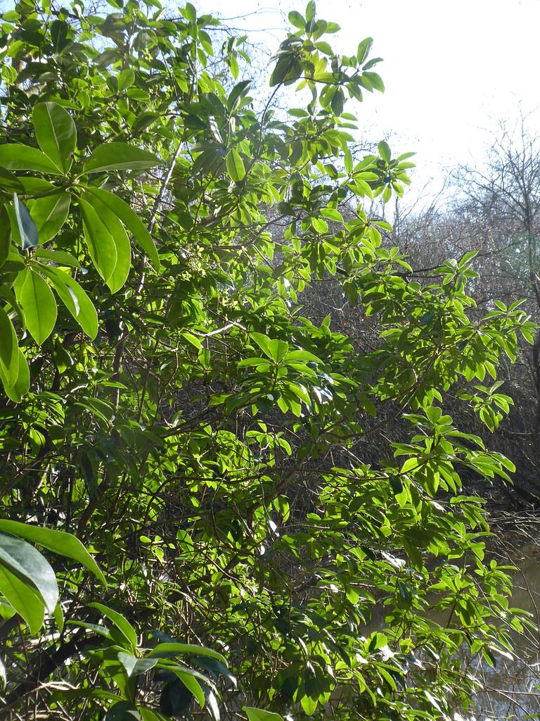 Foliage, Sheffield Park, East Sussex