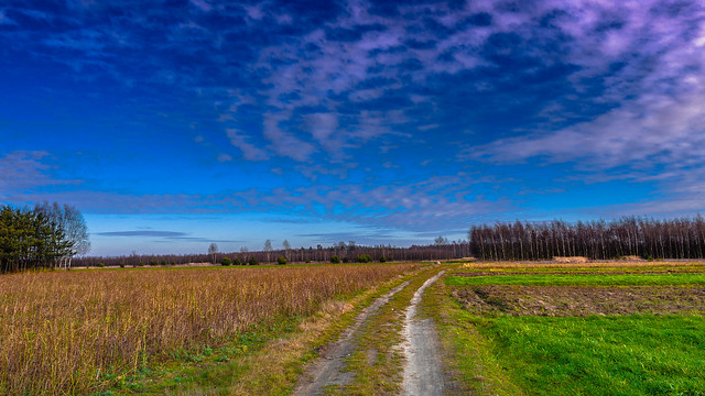Field landscape Jelnia