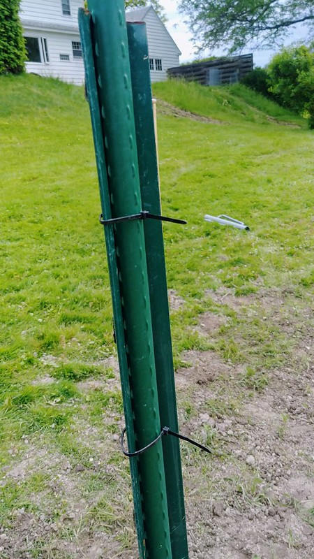 5. Zip-tie 7' sturdy stakes into the t-posts