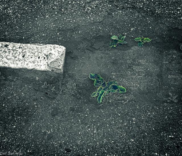 Abgesoffen --- Drowned