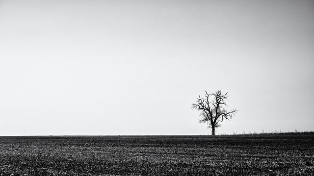 The small Tree II...