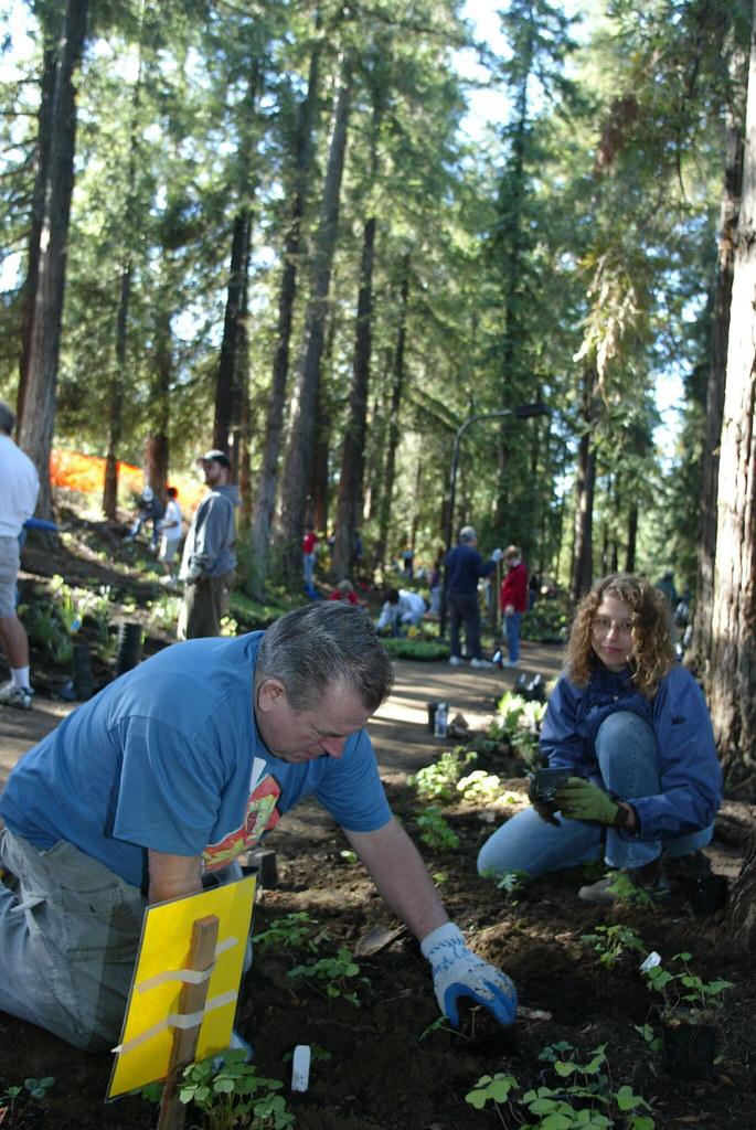 redwood11