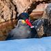 Inca Tern 2 (1 of 1)
