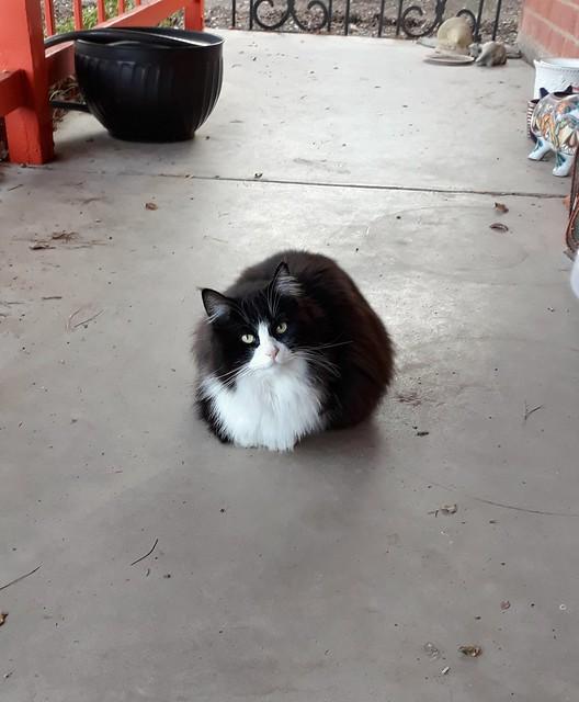 Fluffy little loaf