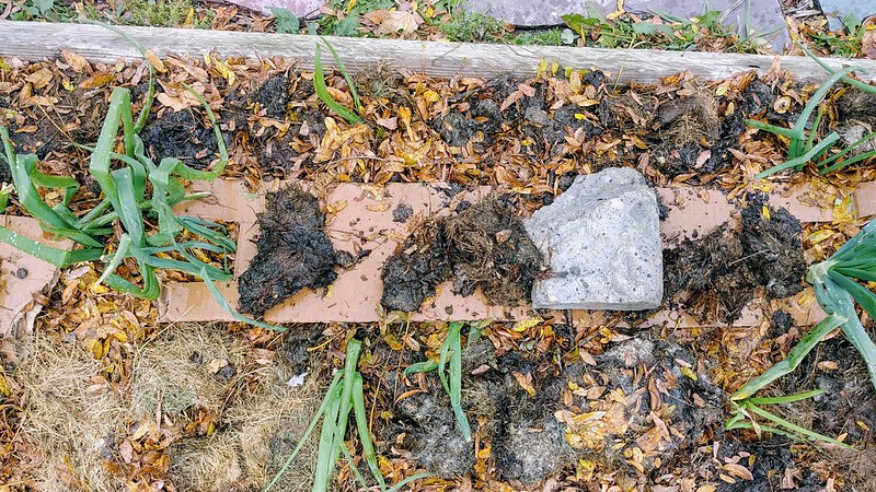 Fall Prep - Adding organic matter to onion beds