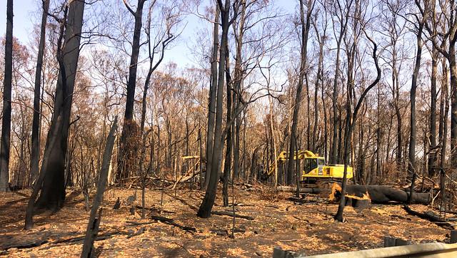 Clearning burnt timber - Sassafras bushfire