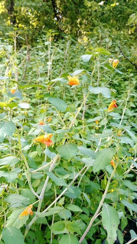 Hugelkultur Wildflower Bed (Deer Resistant)