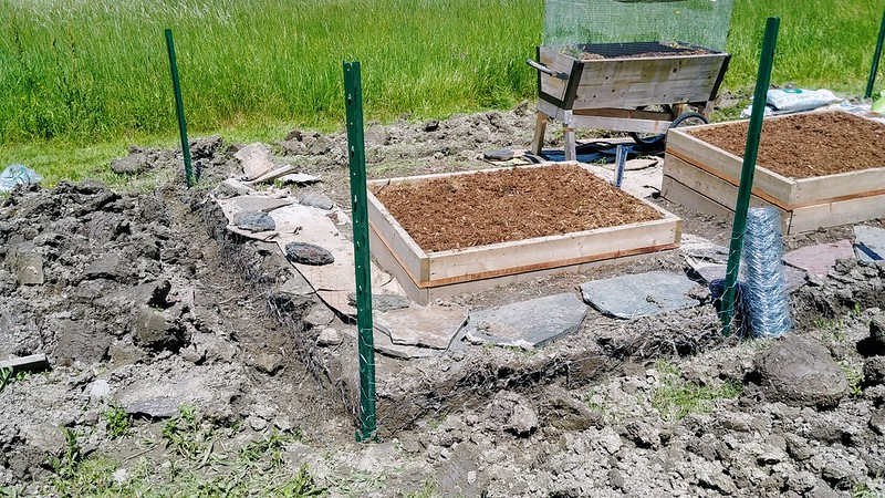 """2. Sink T-posts into the corners, wrapchicken wire around with 8"""" above, and at least 6"""" bent horizontally"""