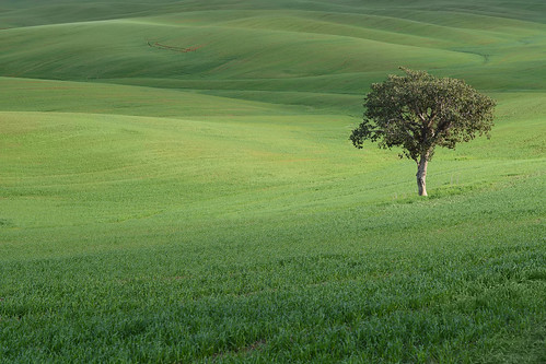 tree nature landscape green israel lonely scenery filed