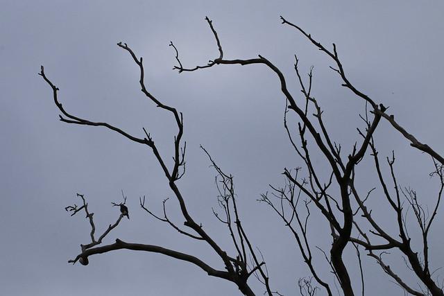 Bare trees, grey light