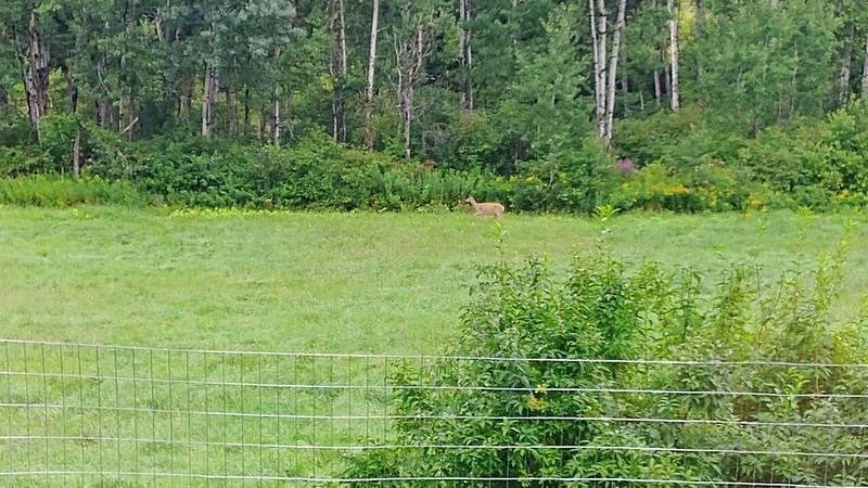 Single deer.