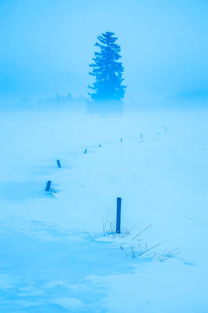 Ground Fog and Snow in the Fraser River Valley, British Columbia, Canada