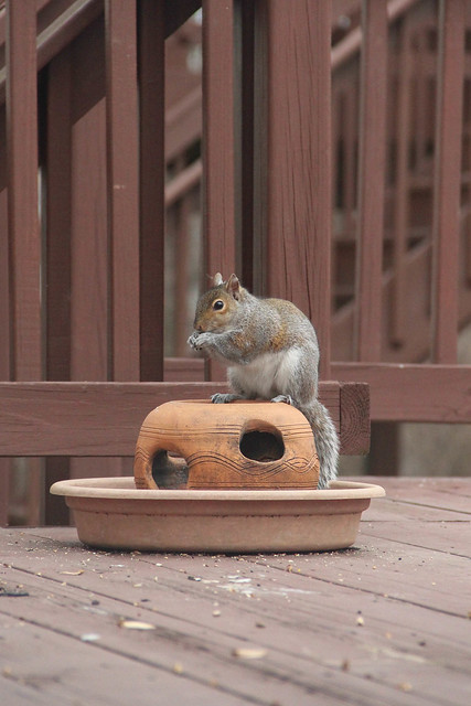 Hungry Squirrels