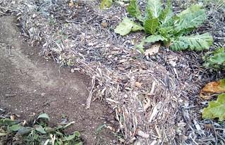 Amas de terre dans le potager