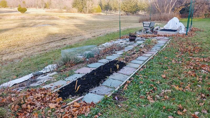 Fall Prep - Compost on volunteer asparagus
