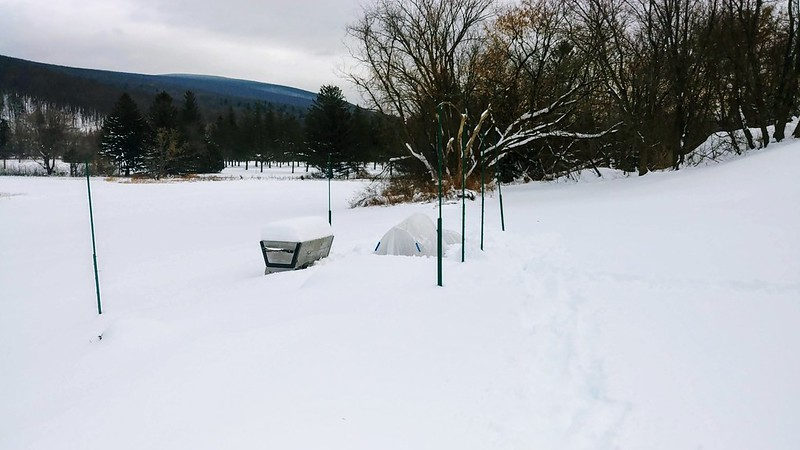 The Snow-Covered Garden 12/4/2019