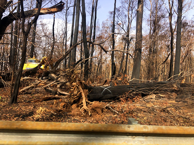 Working to clear the burnt timber - Sassafras