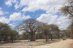 Tanzania Day seven drive to Tarangire  (29 of 32)
