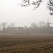 Reitmrooker Mühe im Nebel  MABA7840