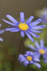 22_Billy Dermody_flower