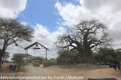 Tanzania Day seven drive to Tarangire  (30 of 32)
