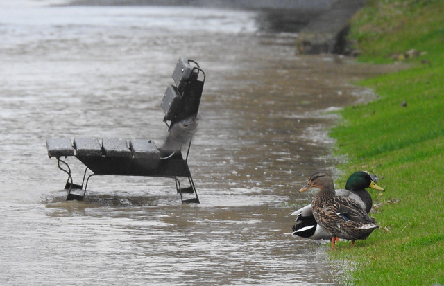 le parc inondé profite aux canards ...