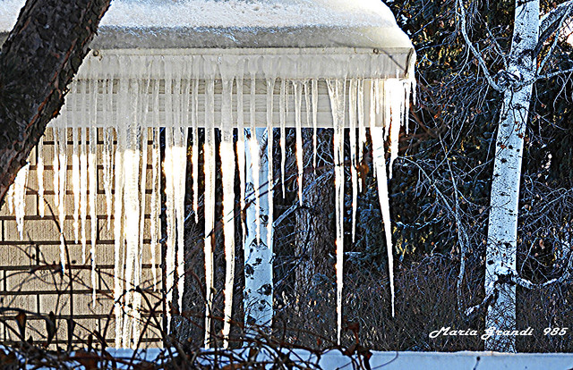 Icicles Hang from the Roof of my Neighbor