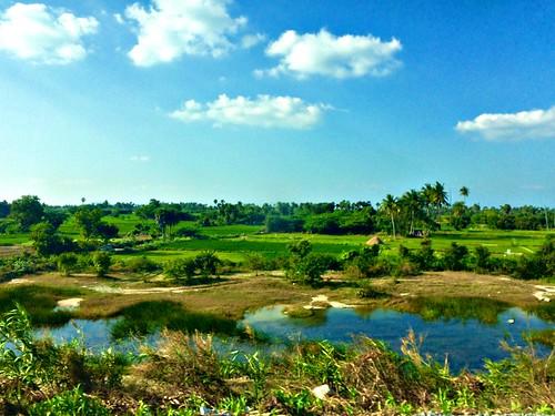 Scenery en route Katpadi. From the train window.