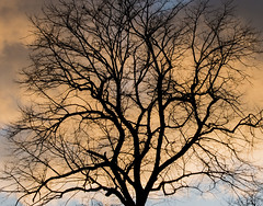 Sunset colour behind tree
